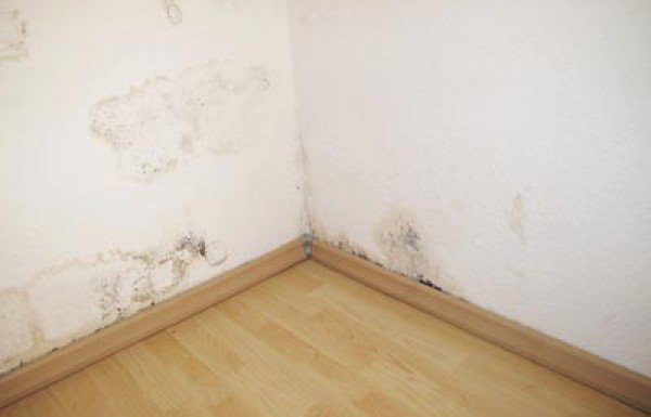רטיבות בקירות הדירה
